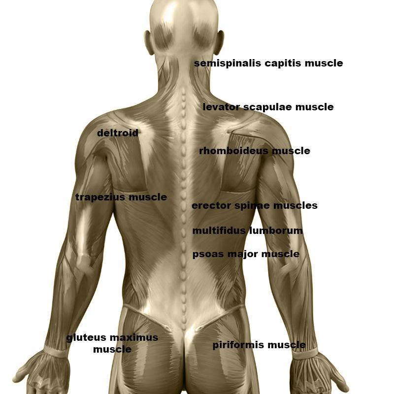 Masaje de hombros - Extensión de los rodillos